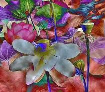 fiori di lotoer