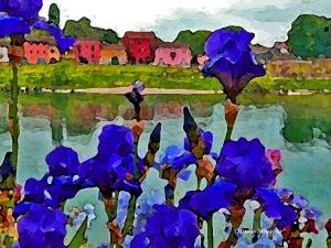 Iris Blu